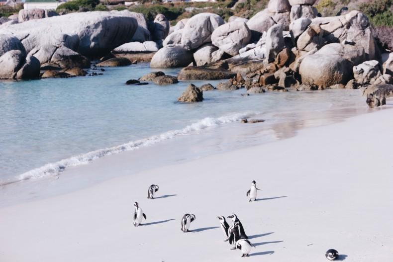 bouders-beach-em-cape-town