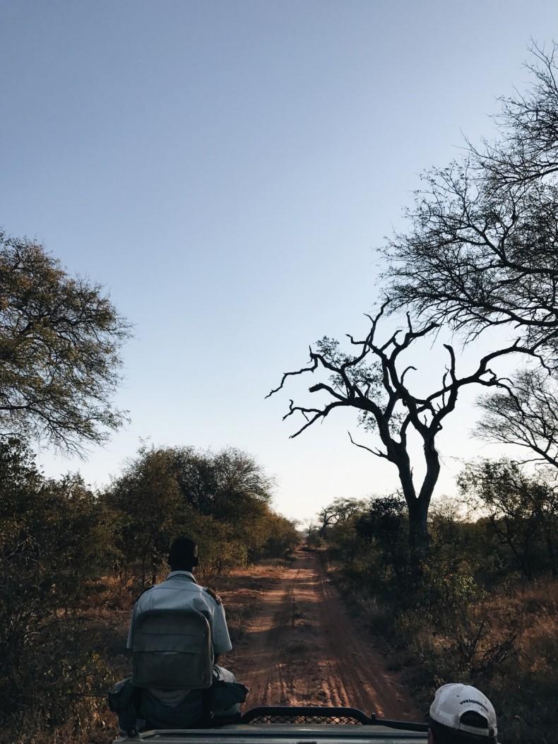 dicas-safari-africa-do-sul-1
